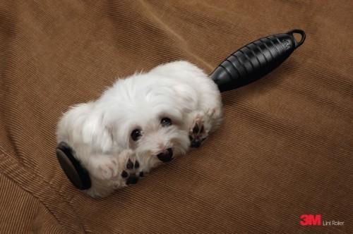 publicite_3M_brosse_anti-poils_chien