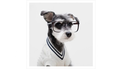 Dogs Mr Porter Instagram mode (1)