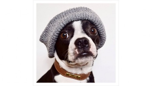 Dogs Mr Porter Instagram mode (3)