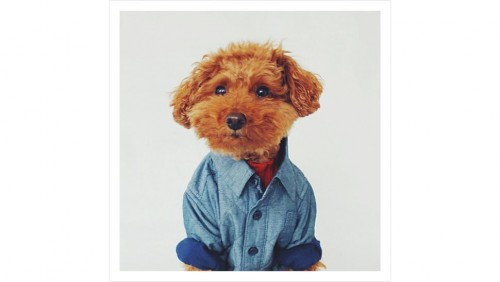 Dogs Mr Porter Instagram mode (4)