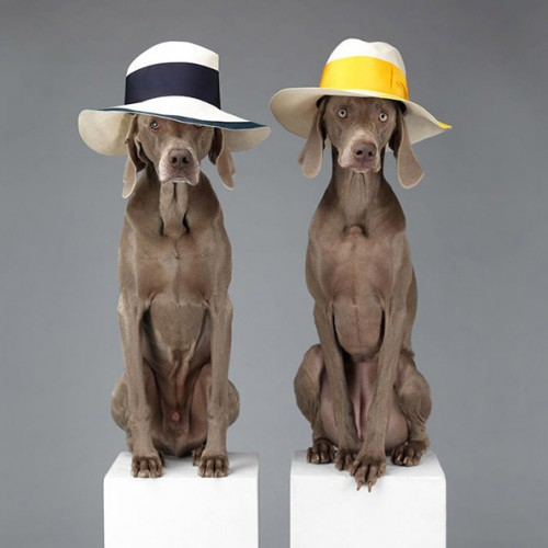 William Wegman ACNE Spring 2013 Campaign