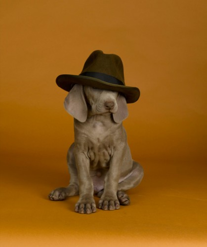 William_Wegman_30