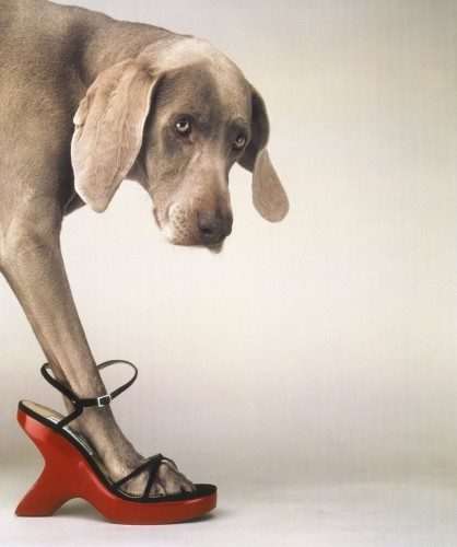 william_wegman_walk_a_thon_1024x768